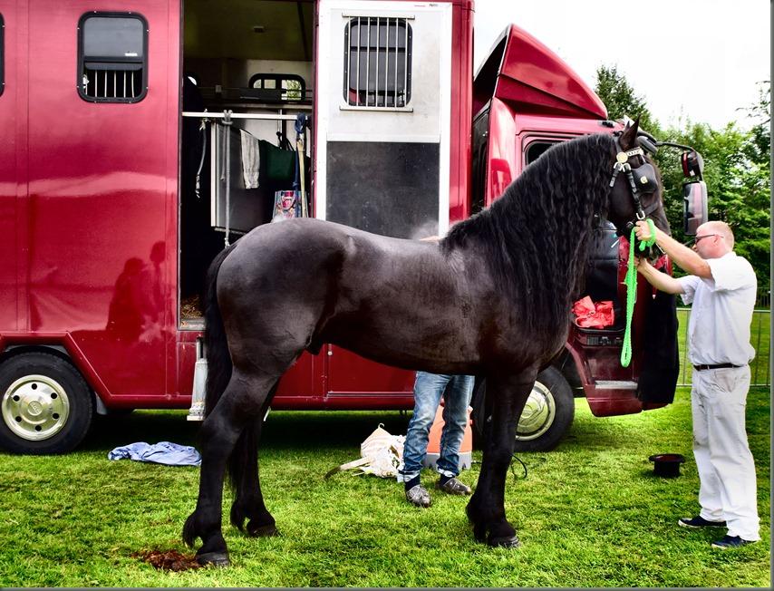 Paard, na het werk sproeien en verzorgen